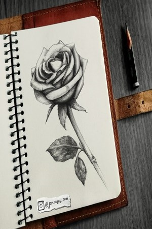 pencil easy drawings flower inspiration rose draw