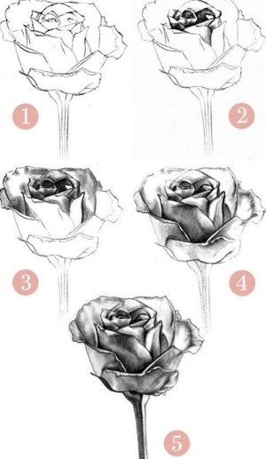 easy pencil drawings flower inspiration drawing difficult rose