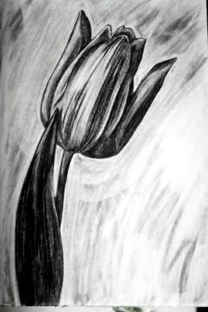 pencil easy drawings flower inspiration draw tulip