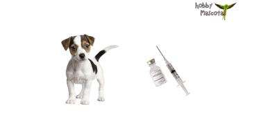 Calendario de vacunas para perros