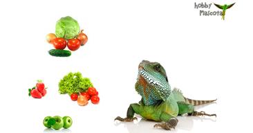 Alimentación de la iguana