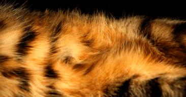 Consejos para controlar y frenar la caída del pelo del gato