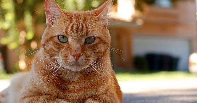 Consejos para cuidar a tu gato en verano