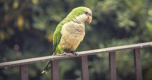 Cómo-puedo-saber-si-mi-pájaro-está-enfermo