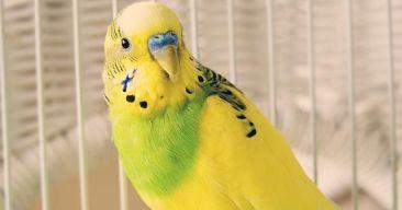 Consejos para mantener una buena higiene en las aves