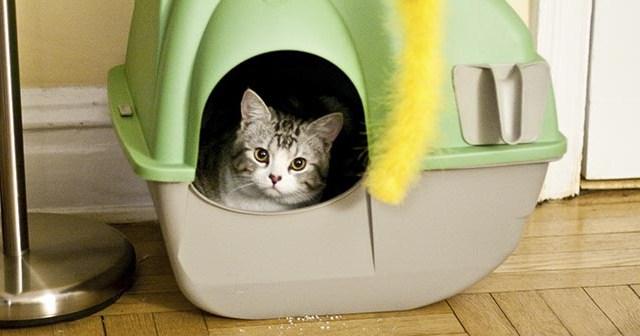 Consejos-para-que-la-arena-de-los-gatos-no-huela