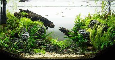 Accesorios y mantenimiento de los acuarios
