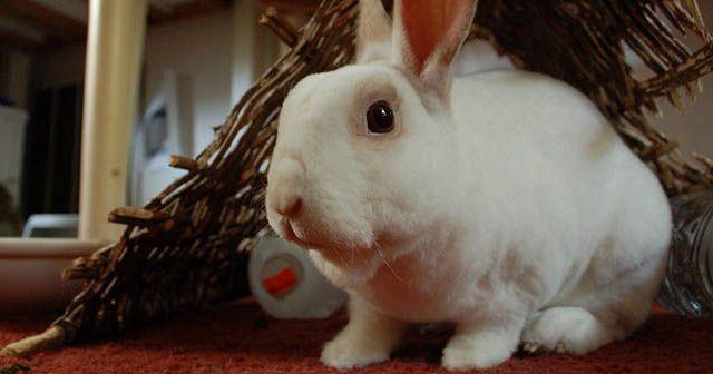 consejos-para-evitar-que-el-conejo-muerda-los-cables