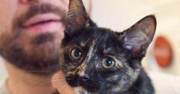 Cómo detectar y reducir los síntomas de la alergia a los gatos