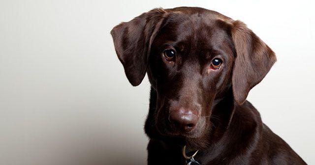 Por-qué-mi-cachorro-vomita-hobby-mascotas