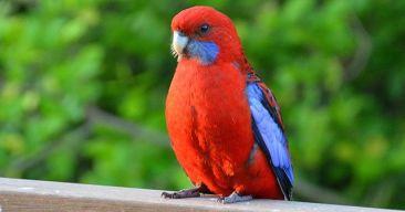 ¿Cómo puedo saber si mi pájaro está estresado?