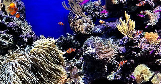 cual-es-la-temperatura-ideal-para-un-acuario-marino-hobby-mascotas