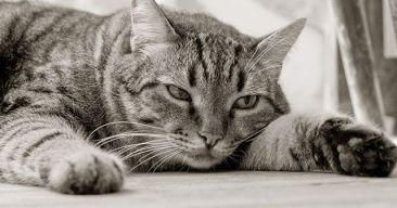 ¿Qué puedo hacer si mi gato está triste?
