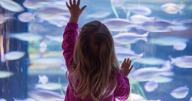 como-educar-a-un-nino-para-tener-un-acuario-hobby-mascotas
