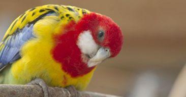 5 consejos para que nuestras aves sean felices