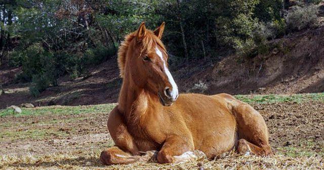 cuidados-básicos-del-caballo-hobby-mascotas