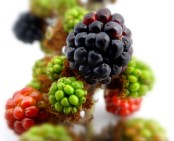 food photographs photo product berry berries desert icecream delicious great professional red green black