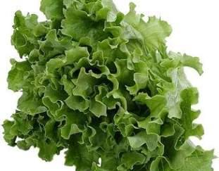 tip-memilih-bahan-bahan-salad-selada-persiapan