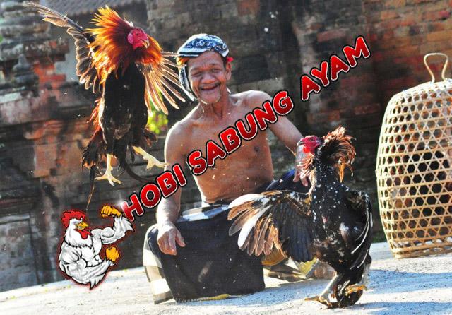 Sejarah-Judi-Sabung-Ayam2