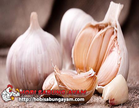 Manfaat Alami Bawang Putih Untuk Ayam Aduan Serta Cirinya