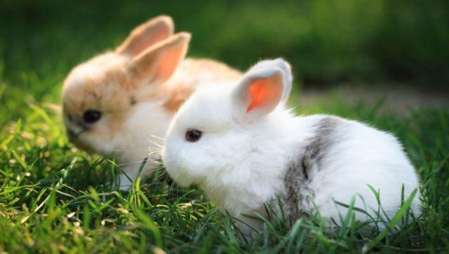Kelinci memiliki sifat suka mengali lubang dan suka mengerat | image 1