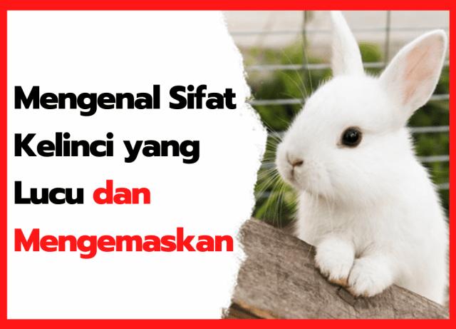 Mengenal Sifat Kelinci yang Lucu dan Mengemaskan | cover
