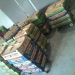 Penjualan DOC Ayam Kampung Super untuk Daerah Palembang