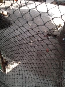 Menggunakan Jaring Kandang Ayam untuk Kandang Burung