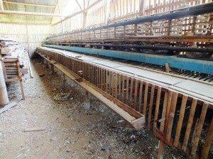 Contoh Kandang Ayam Kampung Super dengan bahan dasar kayu