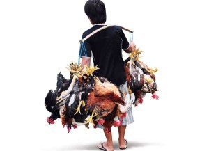 strategi pemasaran ayam kampung super