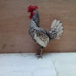 Ayam Batik Itali