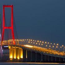 Harga Jual DOD atau Bibit Bebek Peking untuk Daerah Surabaya