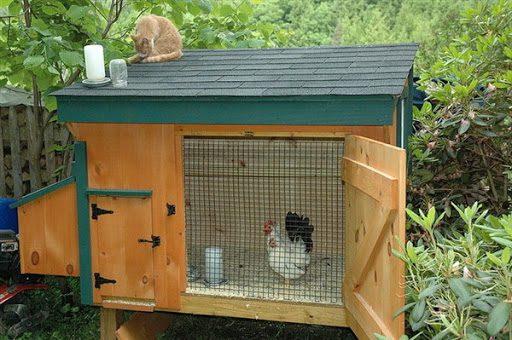 Salah satu contoh kandang ayam serama