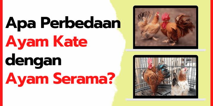Mau Tau Apa Perbedaan Ayam Kate dan Ayam Serama, Ini dia Jawabannya!!!