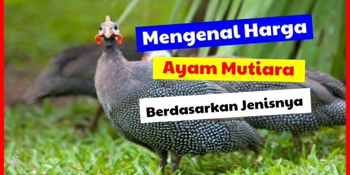 Mengenal Harga Ayam Mutiara Berdasarkan Jenisnya