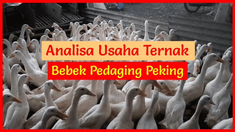 Analisa Usaha Ternak Bebek Pedaging Peking 500 Ekor | HOBI ...