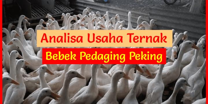 Analisa Usaha Ternak Bebek Pedaging Peking 500 Ekor