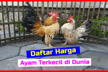 Daftar Harga Ayam Serama