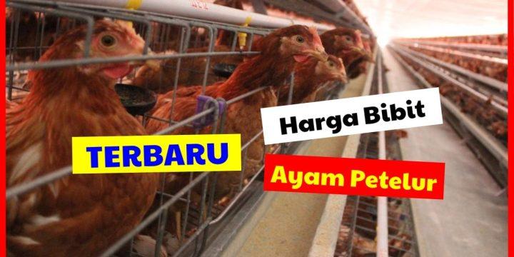 Harga DOC Ayam Petelur Layer & Keunggulan dalam Beternak Ayam Petelur