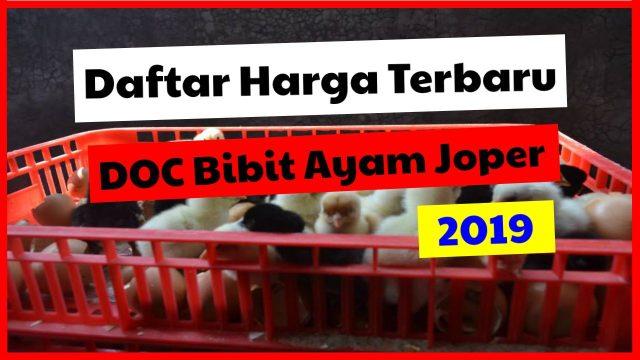 Daftar Harga DOC JOPER (Ayam Kampung Super) di Tahun 2019
