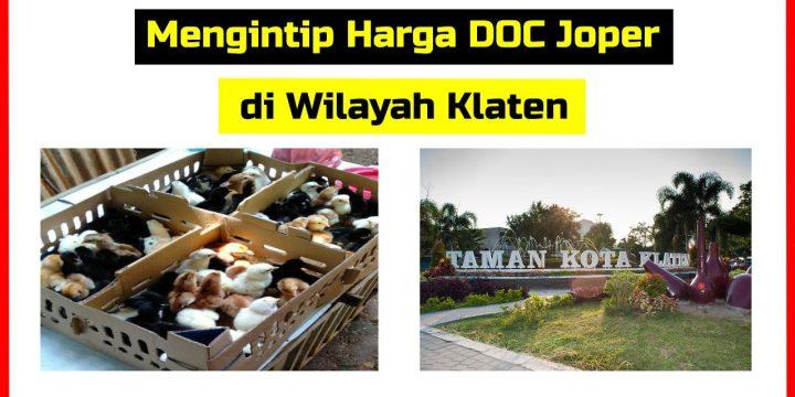 Mengintip Harga Jual DOC Ayam Joper Klaten Jawa Tengah