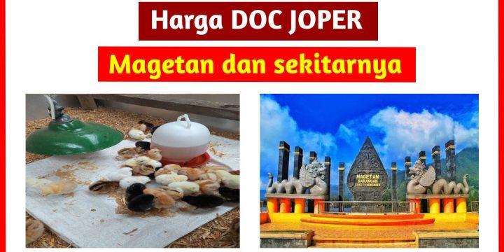 Harga Terbaru DOC JOPER Area Magetan Jawa Timur dan Sekitarnya
