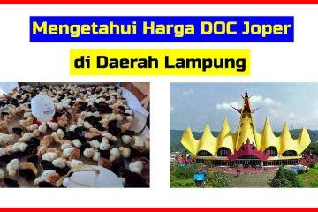 Harga DOC Joper di Bandar Lampung