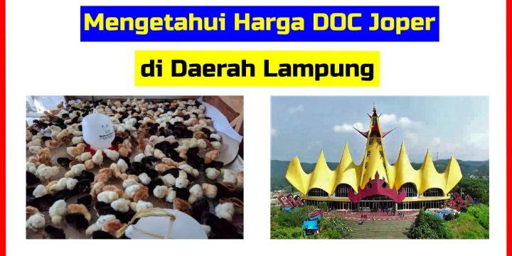 Jual Bibit Ayam Kampung Super Di Lampung Archives Hobi Ternak