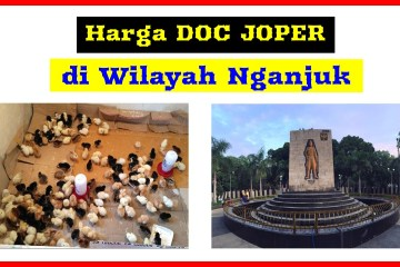 harga doc joper di wilayah Nganjuk