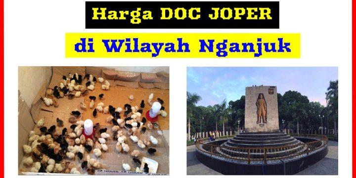 Berita Terbaru Harga DOC Ayam JOPER di Nganjuk