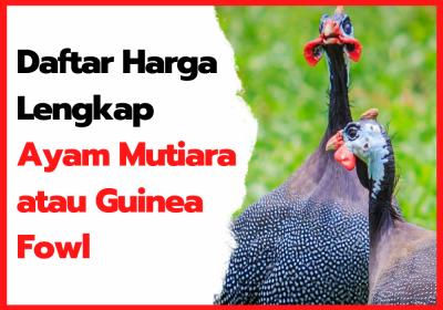 Daftar Harga Ayam Mutiara Di Hobiternak.com