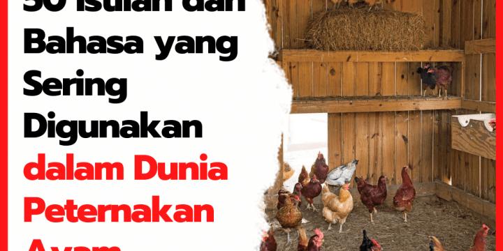 50 Istilah dan Bahasa yang Sering Digunakan dalam Dunia Peternakan Ayam