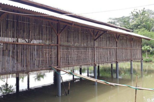 Beternak Ayam dan Lele merupakan kegiatan yang sudah tidak asing lagi di masyarakat