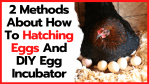2 Methods About How To Hatching Eggs And DIY Egg Incubator